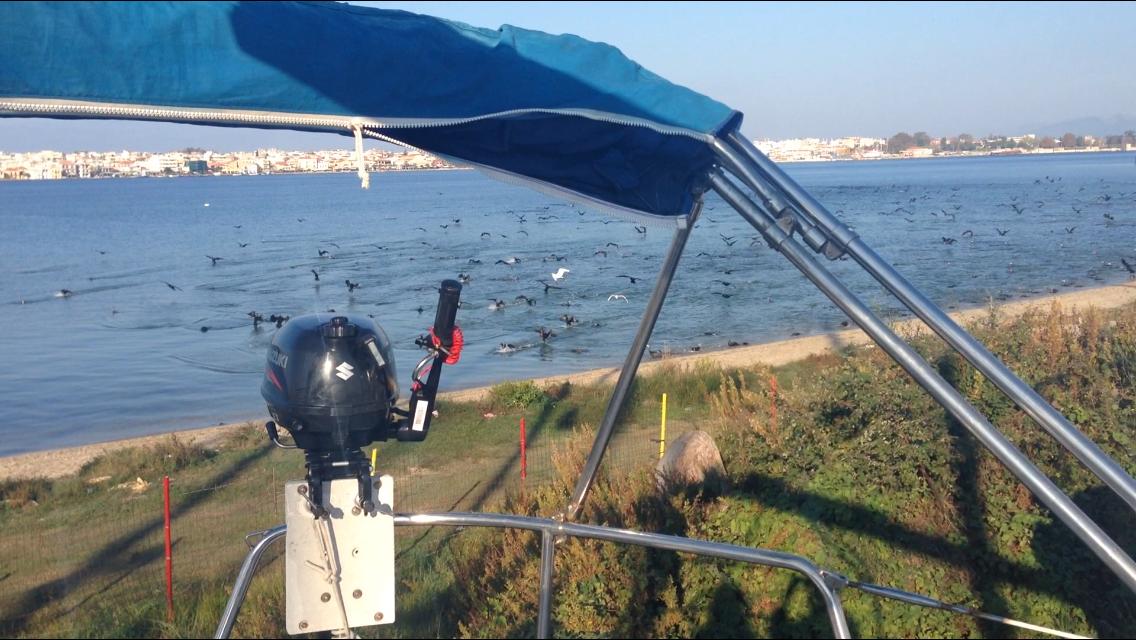 Filmpje: Aalscholvers verzamelen zich
