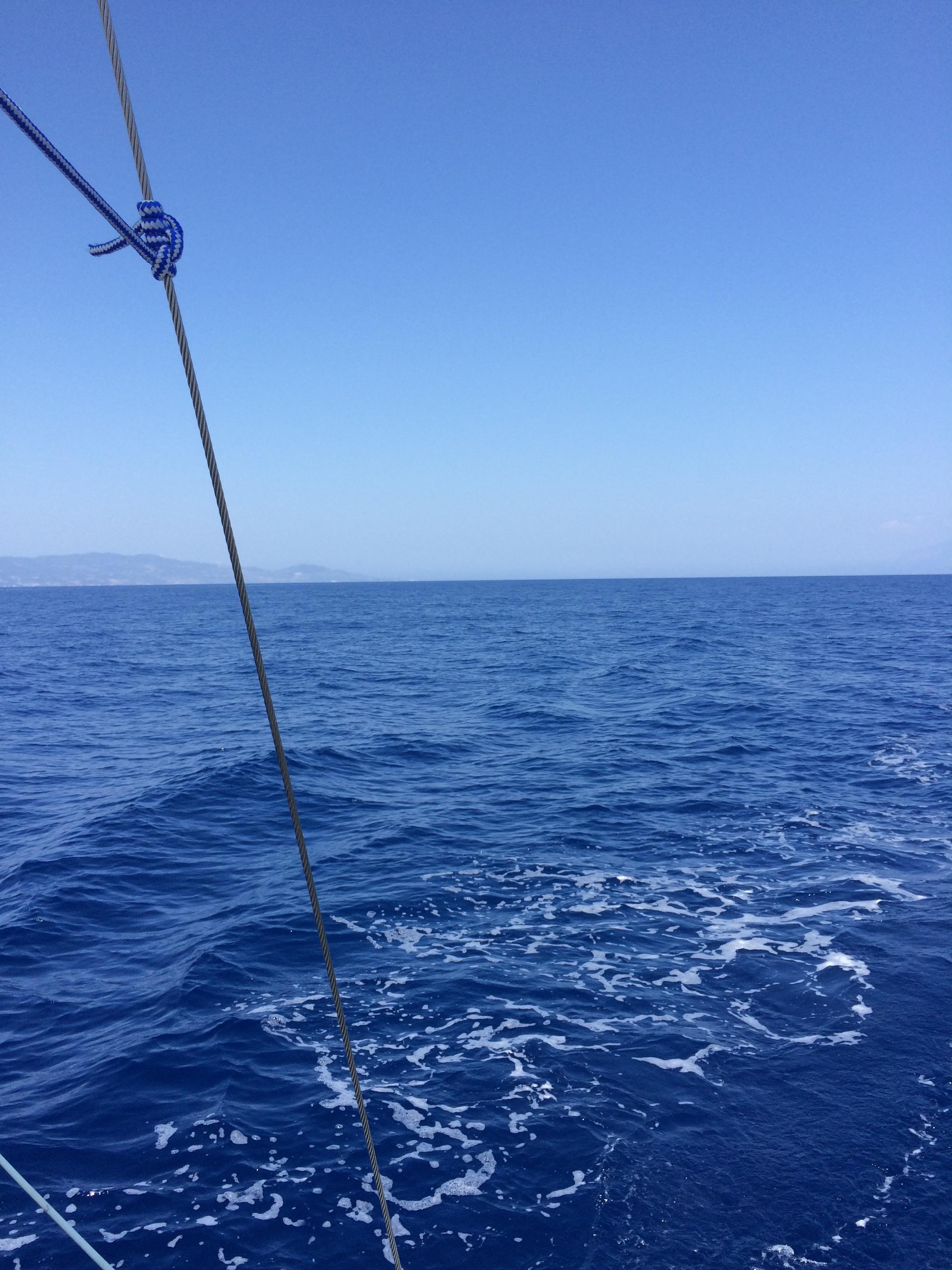 Dolfijnen op jacht